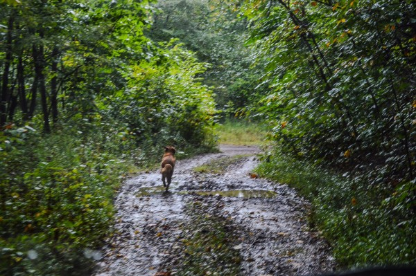 """Banks"" is now nearly five years old and he always accompanies Morici on his hikes."